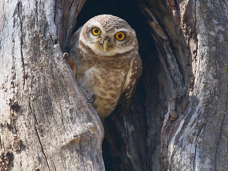 15 Mysterious Facts About Owls  Mental Floss